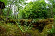 Green forest with ferns in Latvia