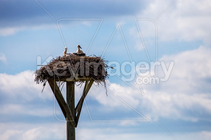 Storks baby in nest on blue sky background. Photo #60895