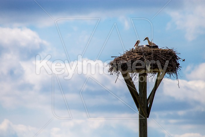 Storks baby in nest on blue sky background. Photo #60896