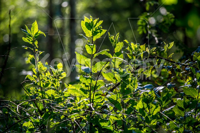 Wild plants growing on forest. Photo #61288