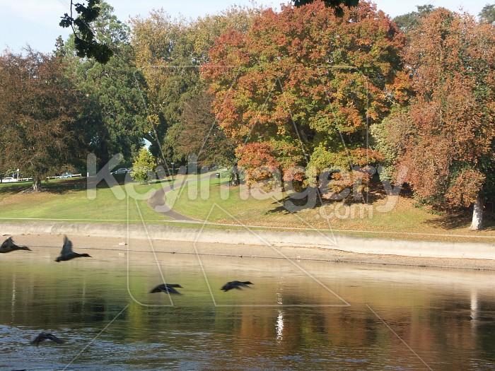 Waikato River in Autumn Photo #4164