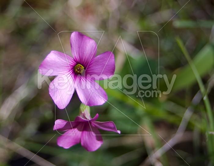 Grass Flower Photo #4248