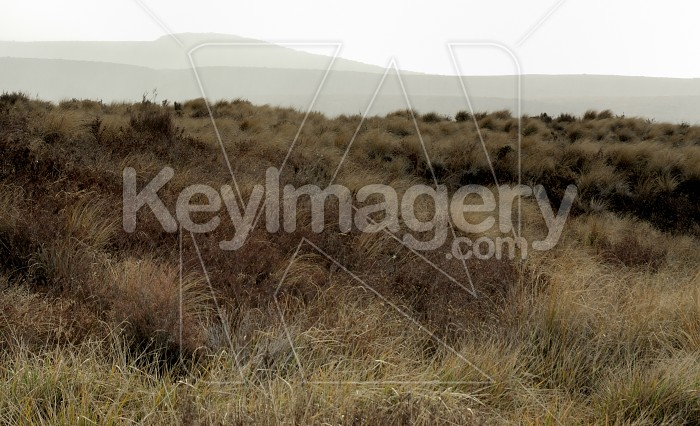 Mountain Tussock Photo #6246