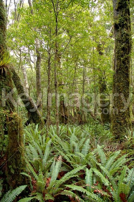 New Zealand Bush Photo #4307