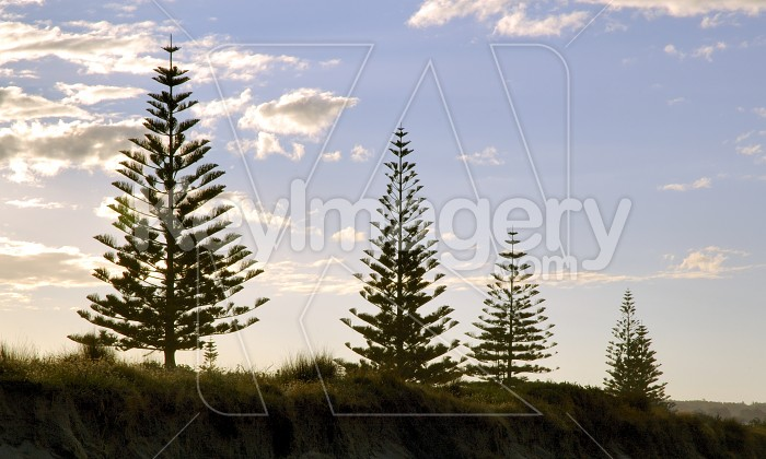 Ohope Trees Photo #4484