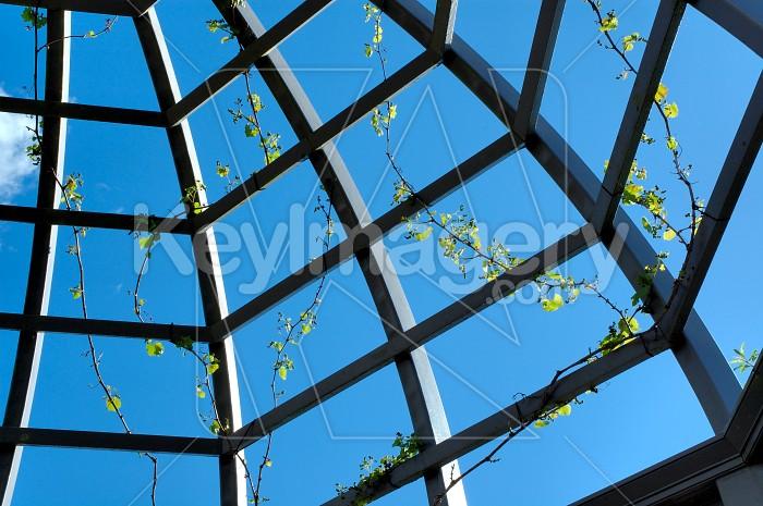 Quarter Vine Trellis Photo #4311