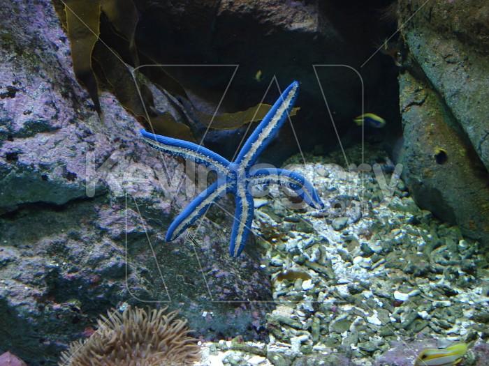 Blue Star Photo #4718