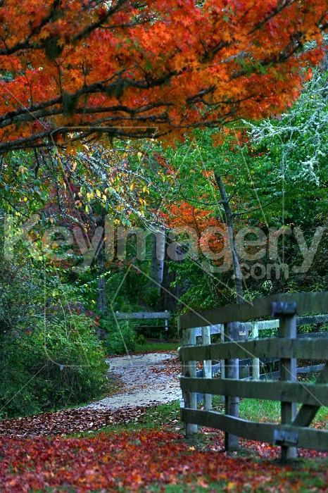 autumn path Photo #4862