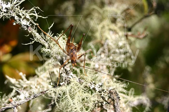 grasshopper Photo #4831