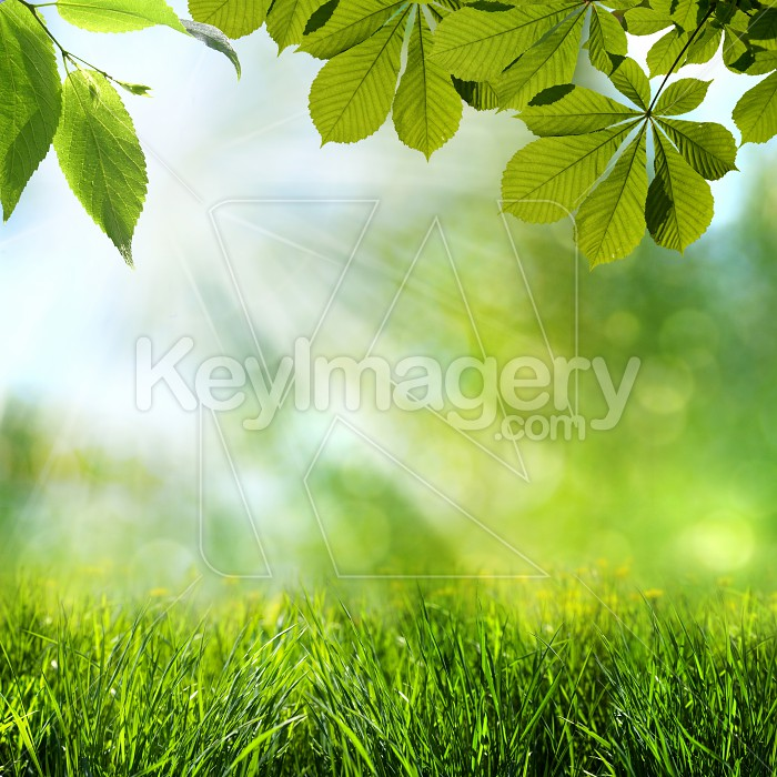Abstract spring and summer backgrounds Photo #51410