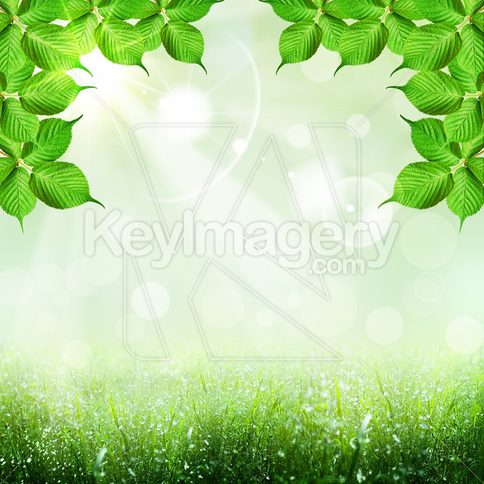 Abstract spring and summer backgrounds with foliage shape Photo #51407
