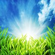Abstract natural backgrounds with green grass unfer the blue ski