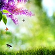 Summer natural backgrounds with lilacs,  butterfly and beautiful