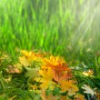 Softness. Autumnal abstract natural backgrounds