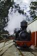 Steam Train Pukemiro