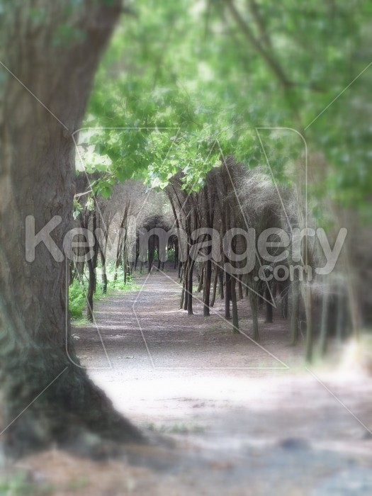 Forest Pathway Photo #7601