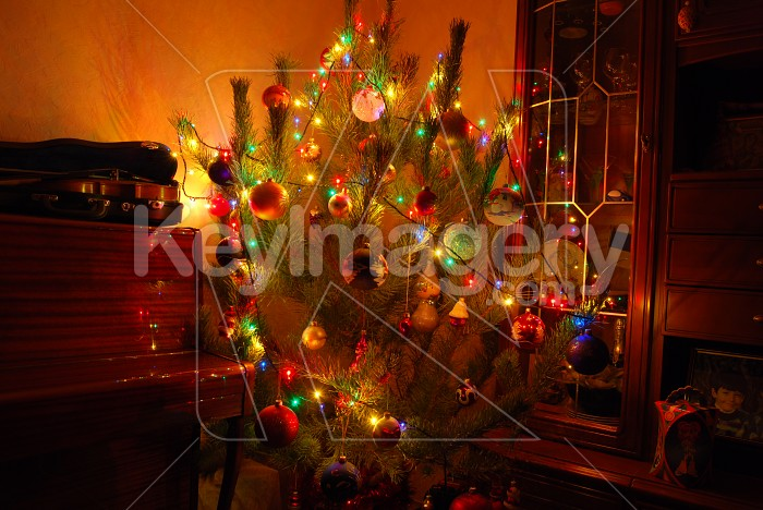 Christmas Tree Photo #6172