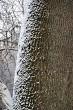 Tree stem in winter
