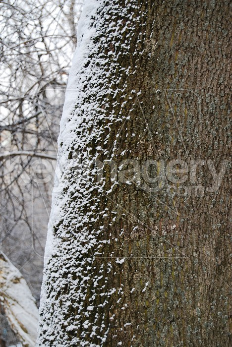 Tree stem in winter Photo #6083