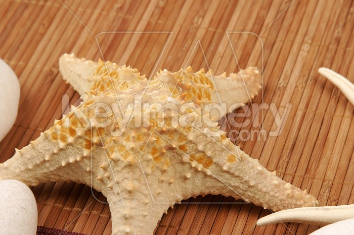 Beach postcard with sea shell and star fish Photo #7895