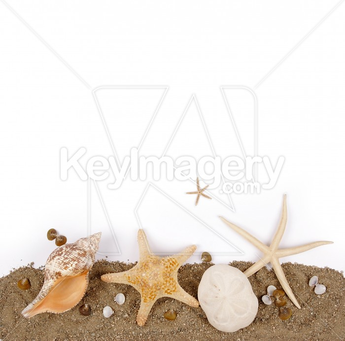 Beach sand with sea shell and star fish Photo #7890
