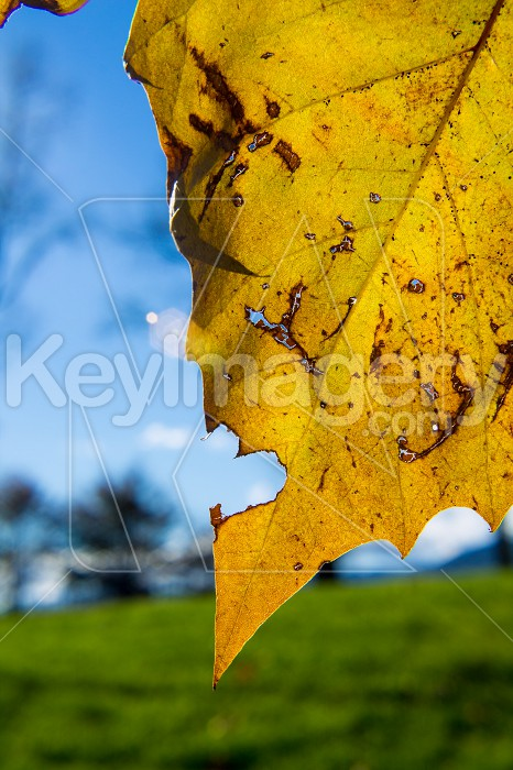 Leaf minus heart shape Photo #55057