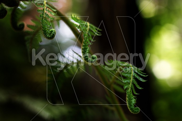 NZ Fern Photo #55061