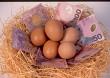 Eggs In One Basket!