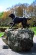 Hunterville Dog