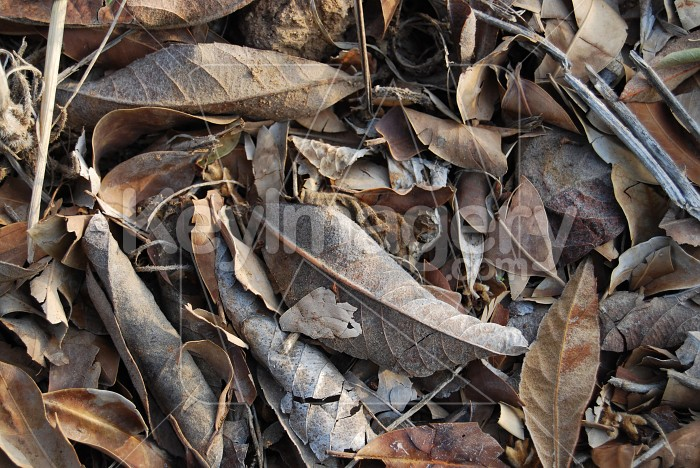 Dry leaves Photo #7902