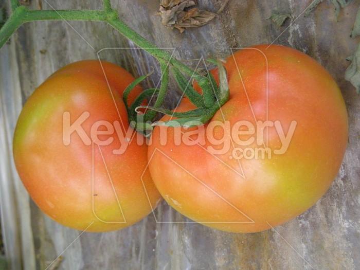 Tomato Couple Photo #6880