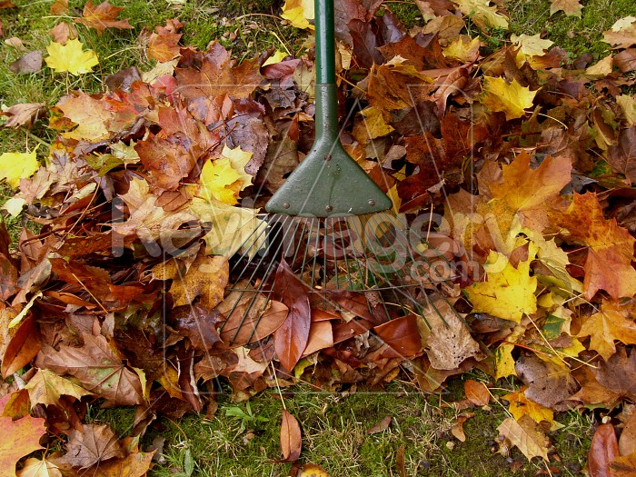 Clearing Autumn Leaves Photo #6177