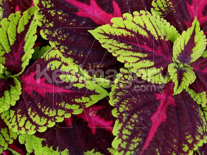 Leaf Pattern Photo #6159