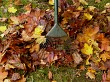 Clearing Autumn Leaves