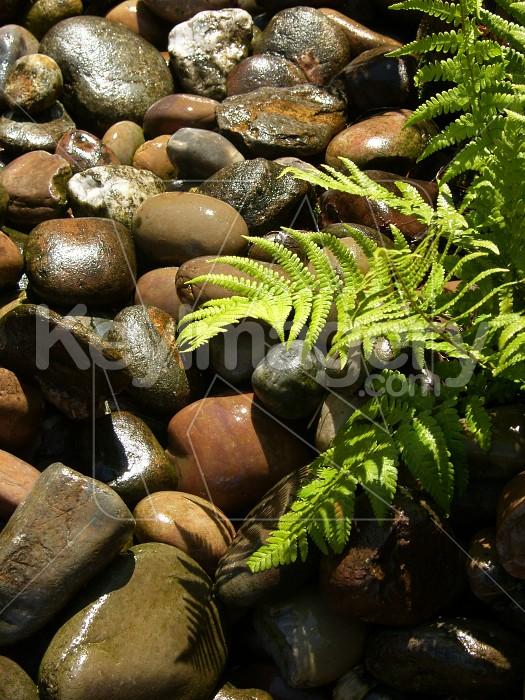 Wet Stones Photo #6122