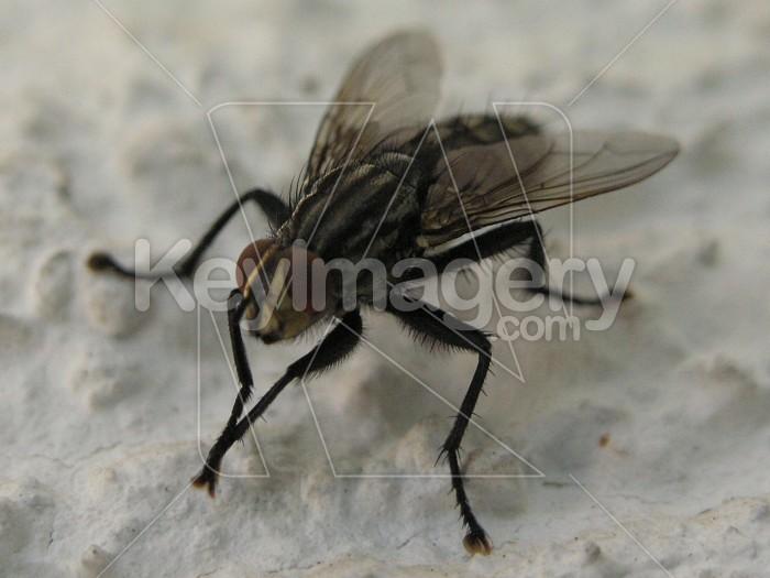 Fly Photo #6340