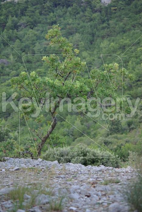 Lonely Tree Photo #6339