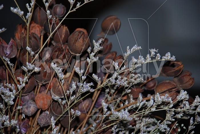 Dry Flowers Photo #6824