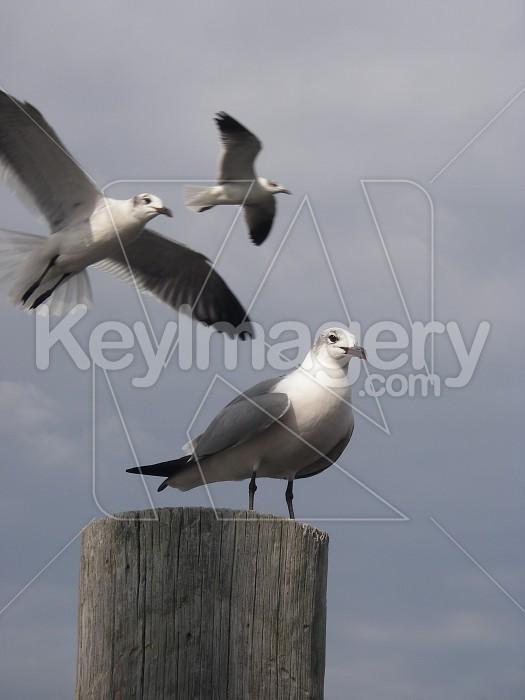 Seagulls Photo #7876