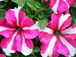 STRIP FLOWERS