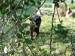 pet cat looking through hedge
