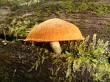Log Life Fungus
