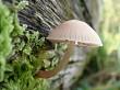 Log life fungi 3