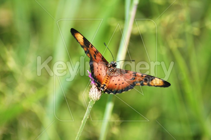 Butterfly Photo #12143