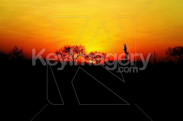 Sun Set Photo #12137