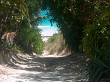 A Scenic path to the beach