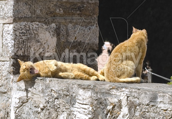 Monasteries cats Photo #12539
