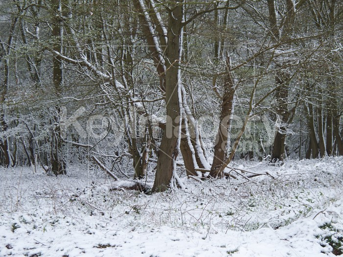 Winter forest Photo #12890
