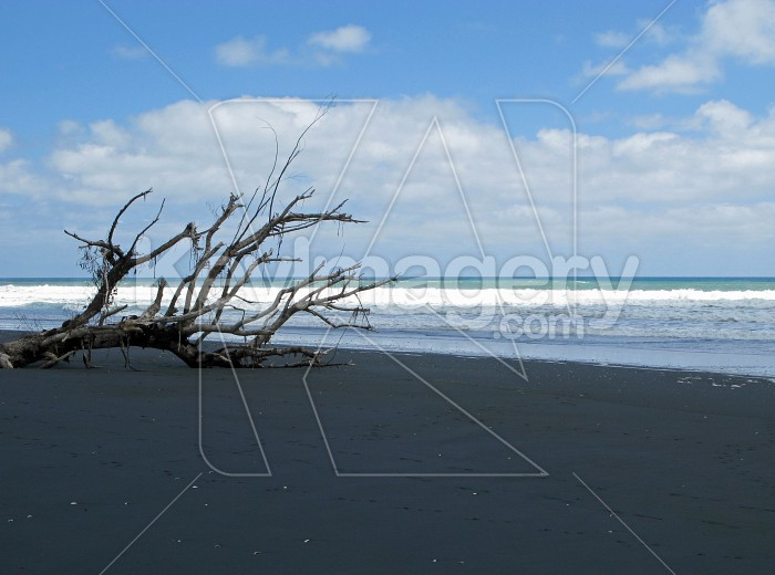 Beach branch Photo #7939