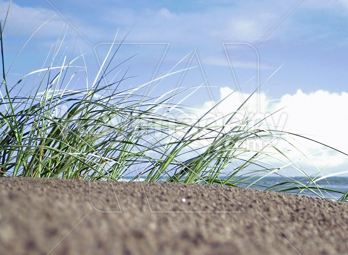 blurry sand and grass Photo #2445